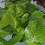 อัปเดตการลงมือปลูกผักไฮโดรโปนิกส์ครั้งแรก