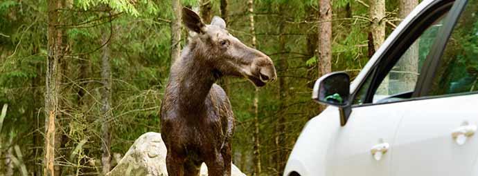 ขับรถชนสัตว์บนถนนเคลมได้ไหม ใครต้องจ่าย