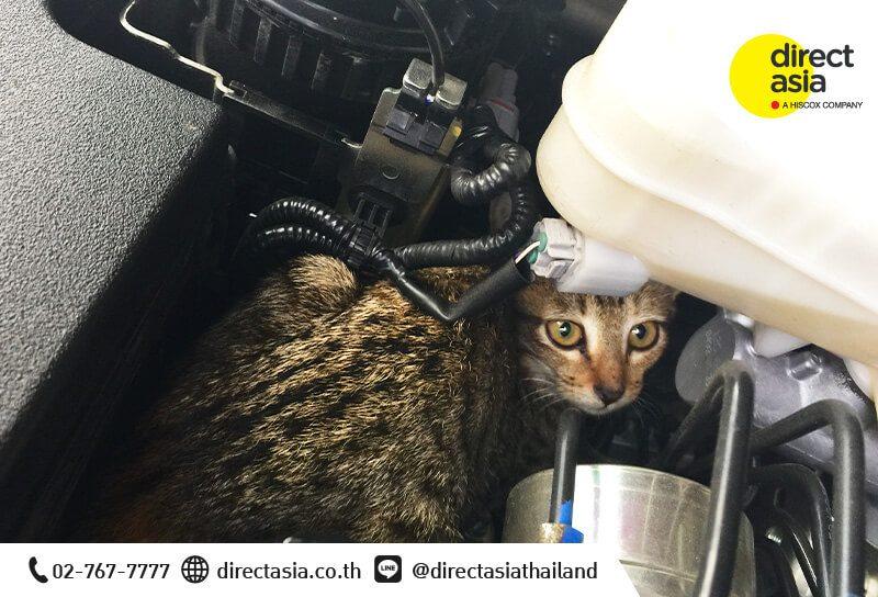 วิธีป้องกันแมวเข้าห้องเครื่องรถ
