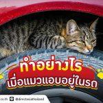 หมดปัญหากวนใจ แมวเข้าไปนอนในห้องเครื่องยนต์