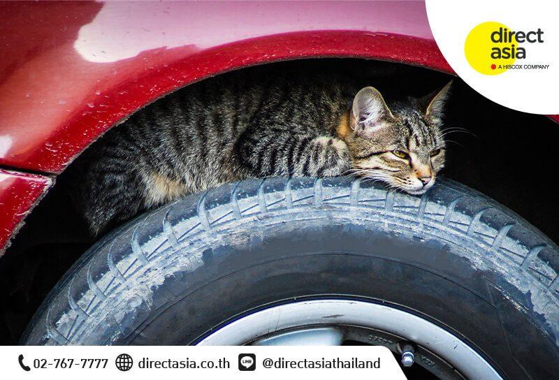ทำอย่างไร เมื่อแมวไปนอนใต้ท้องรถ
