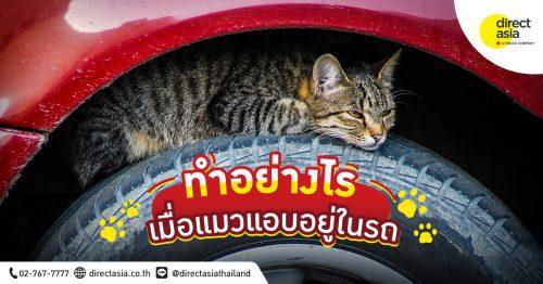 หมดปัญหากวนใจทาสแมว เมื่อแมวเข้าไปนอนในห้องเครื่องยนต์