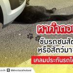ขับรถชนสัตว์ หรือสัตว์ชนจนรถเสียหาย สามารถเคลมประกันได้ไหม?