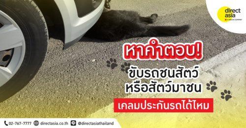 ขับรถชนสัตว์ หรือสัตว์มาชนจนรถเสียหายสามารถเคลมประกันรถได้ไหม